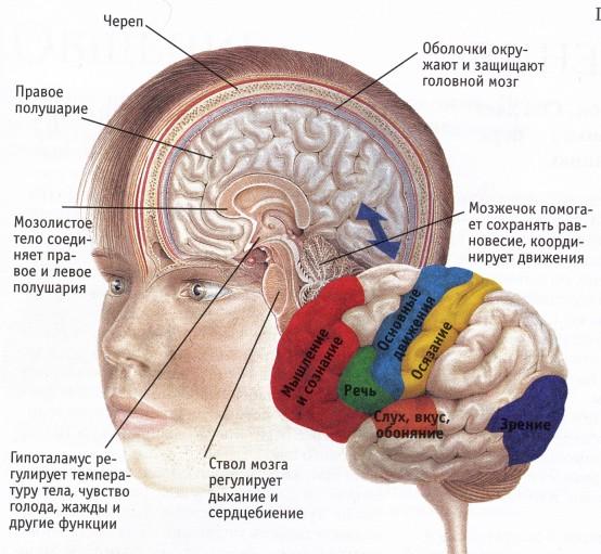Мозжечковая стимуляция для взрослых